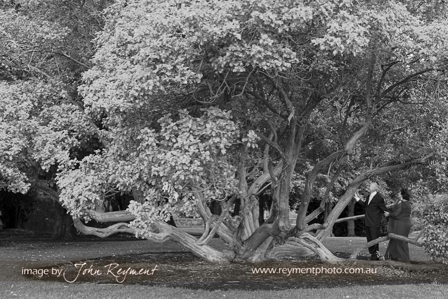 old tree, Botanical Gardens, Camperdown, Victoria,
